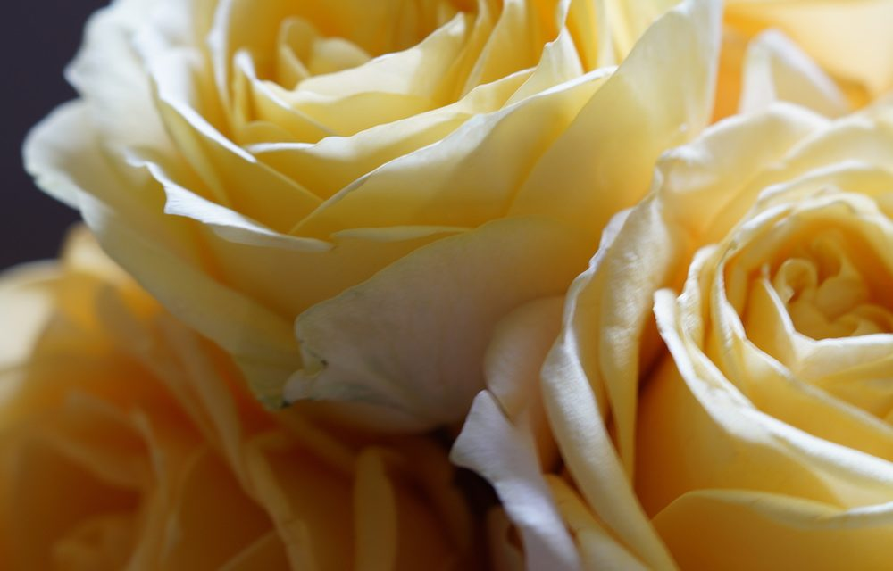 This Rose Day, we invite you to recognize someone special in your life.